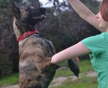 pies sportowy rozciąganie