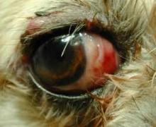 stan po operacji wypadniętej gałki ocznej